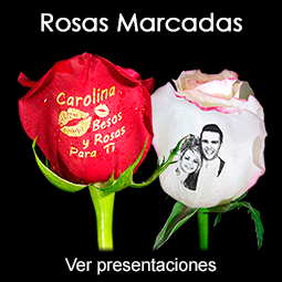 Rosas Naturales Personalizadas